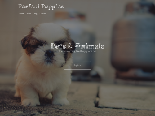 Pets and Animals website template